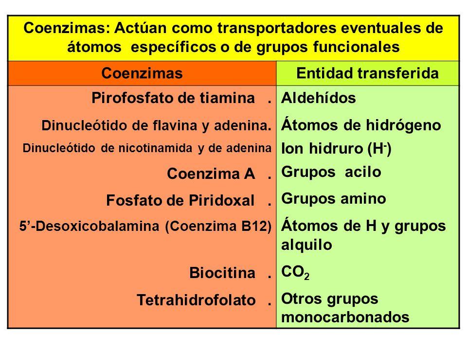 Coenzimas: Actúan como transportadores eventuales de átomos específicos o de grupos funcionales CoenzimasEntidad transferida Pirofosfato de tiamina. D
