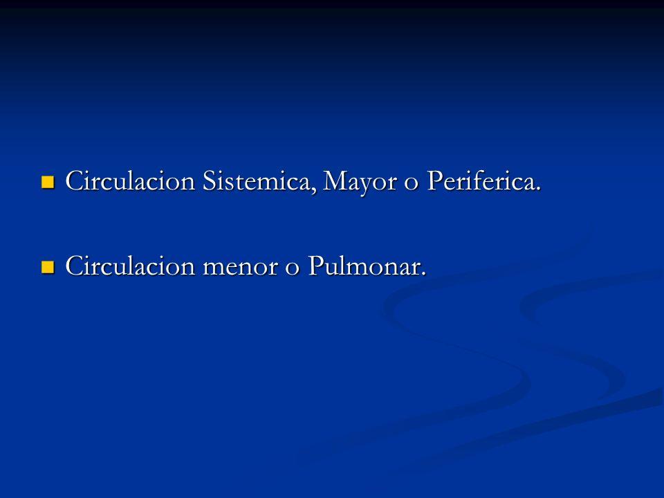 Circulacion Sistemica, Mayor o Periferica. Circulacion Sistemica, Mayor o Periferica. Circulacion menor o Pulmonar. Circulacion menor o Pulmonar.