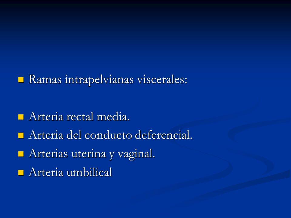 Ramas intrapelvianas viscerales: Ramas intrapelvianas viscerales: Arteria rectal media. Arteria rectal media. Arteria del conducto deferencial. Arteri