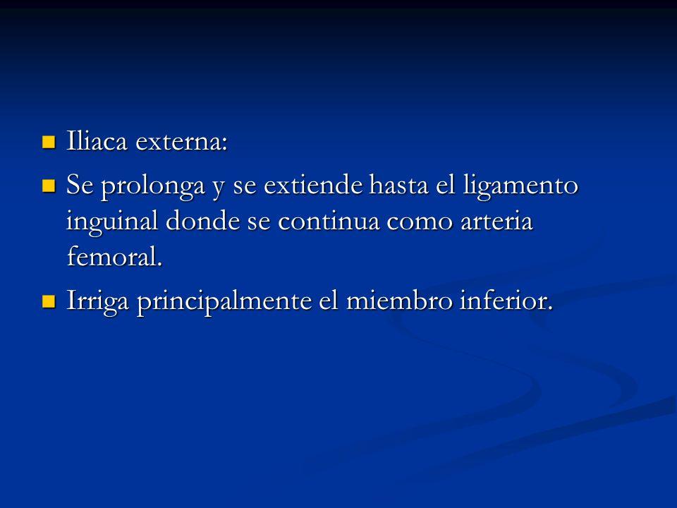 Iliaca externa: Iliaca externa: Se prolonga y se extiende hasta el ligamento inguinal donde se continua como arteria femoral. Se prolonga y se extiend