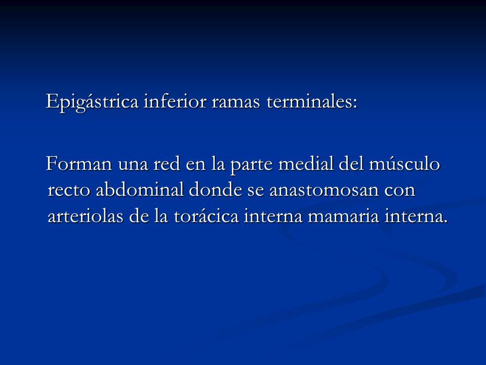 Epigástrica inferior ramas terminales: Epigástrica inferior ramas terminales: Forman una red en la parte medial del músculo recto abdominal donde se a
