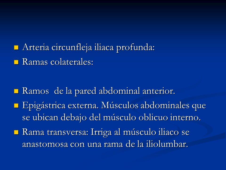 Arteria circunfleja iliaca profunda: Arteria circunfleja iliaca profunda: Ramas colaterales: Ramas colaterales: Ramos de la pared abdominal anterior.