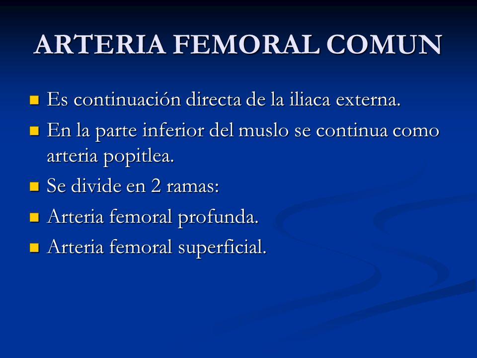 ARTERIA FEMORAL COMUN Es continuación directa de la iliaca externa. Es continuación directa de la iliaca externa. En la parte inferior del muslo se co