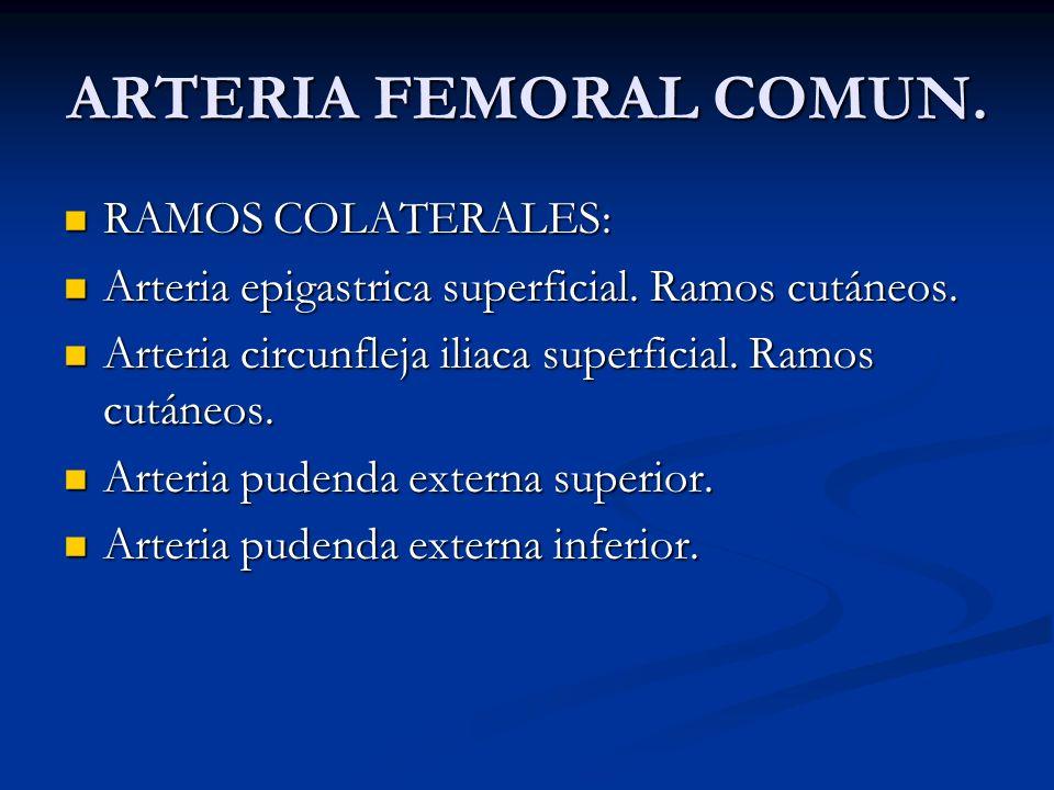 ARTERIA FEMORAL COMUN. RAMOS COLATERALES: RAMOS COLATERALES: Arteria epigastrica superficial. Ramos cutáneos. Arteria epigastrica superficial. Ramos c