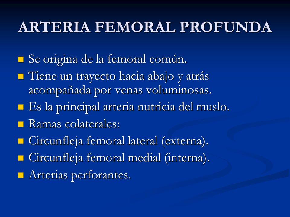 ARTERIA FEMORAL PROFUNDA Se origina de la femoral común. Se origina de la femoral común. Tiene un trayecto hacia abajo y atrás acompañada por venas vo