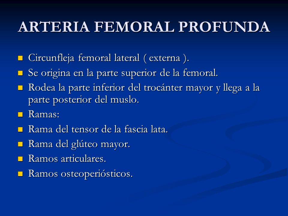 ARTERIA FEMORAL PROFUNDA Circunfleja femoral lateral ( externa ). Circunfleja femoral lateral ( externa ). Se origina en la parte superior de la femor