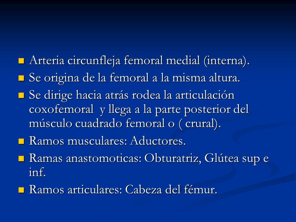 Arteria circunfleja femoral medial (interna). Arteria circunfleja femoral medial (interna). Se origina de la femoral a la misma altura. Se origina de
