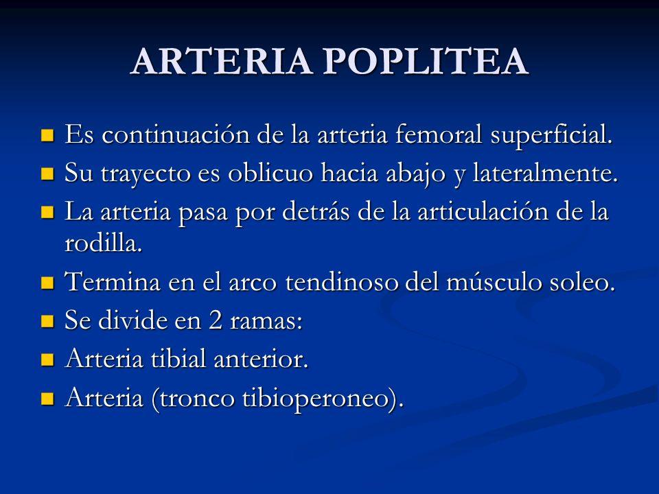 ARTERIA POPLITEA Es continuación de la arteria femoral superficial. Es continuación de la arteria femoral superficial. Su trayecto es oblicuo hacia ab