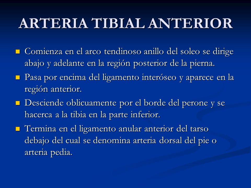 ARTERIA TIBIAL ANTERIOR Comienza en el arco tendinoso anillo del soleo se dirige abajo y adelante en la región posterior de la pierna. Comienza en el