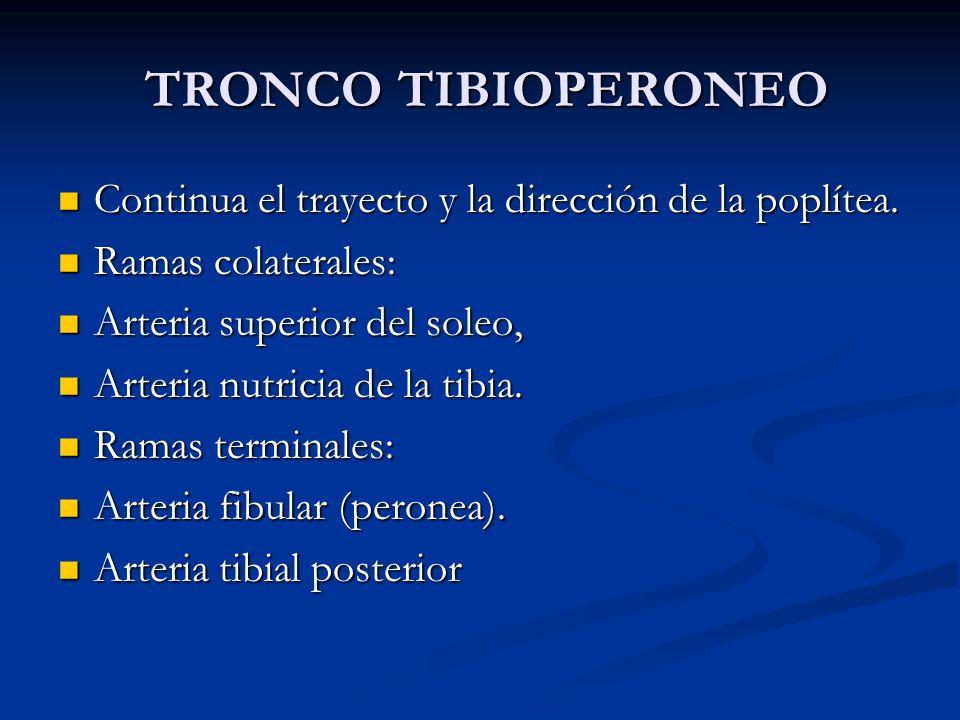 TRONCO TIBIOPERONEO TRONCO TIBIOPERONEO Continua el trayecto y la dirección de la poplítea. Continua el trayecto y la dirección de la poplítea. Ramas
