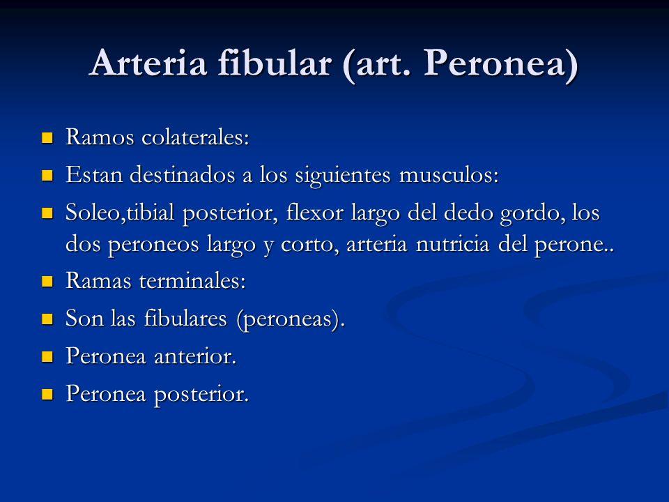 Arteria fibular (art. Peronea) Ramos colaterales: Ramos colaterales: Estan destinados a los siguientes musculos: Estan destinados a los siguientes mus