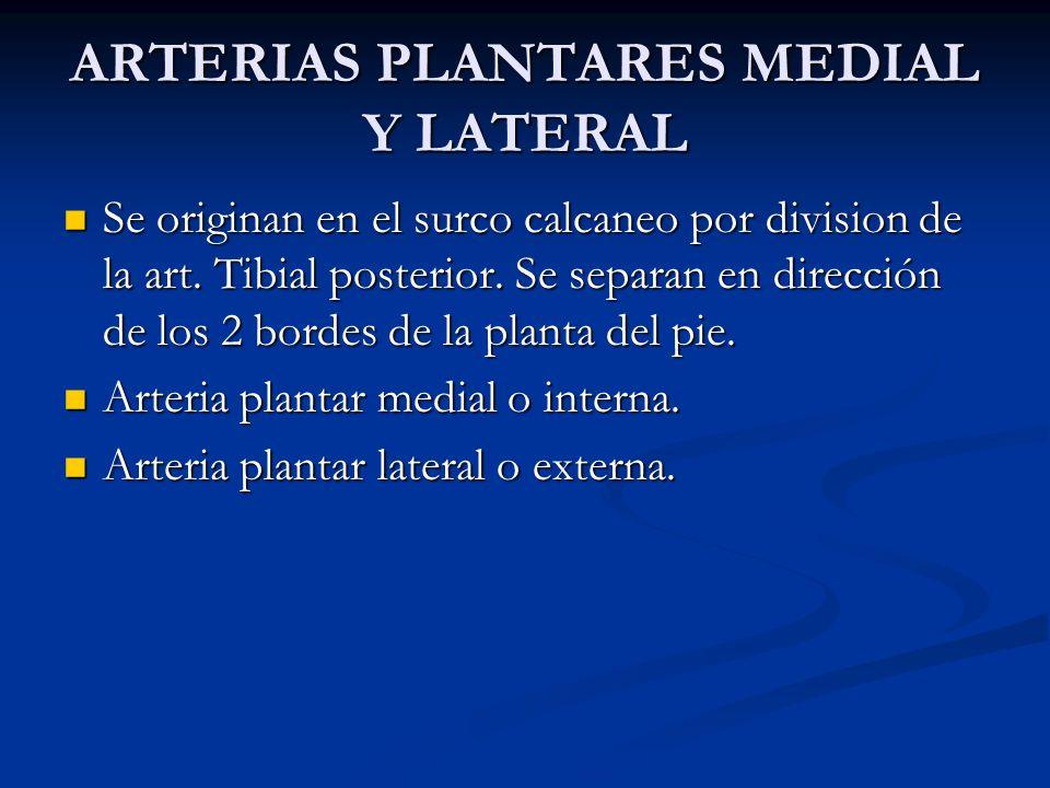 ARTERIAS PLANTARES MEDIAL Y LATERAL Se originan en el surco calcaneo por division de la art. Tibial posterior. Se separan en dirección de los 2 bordes