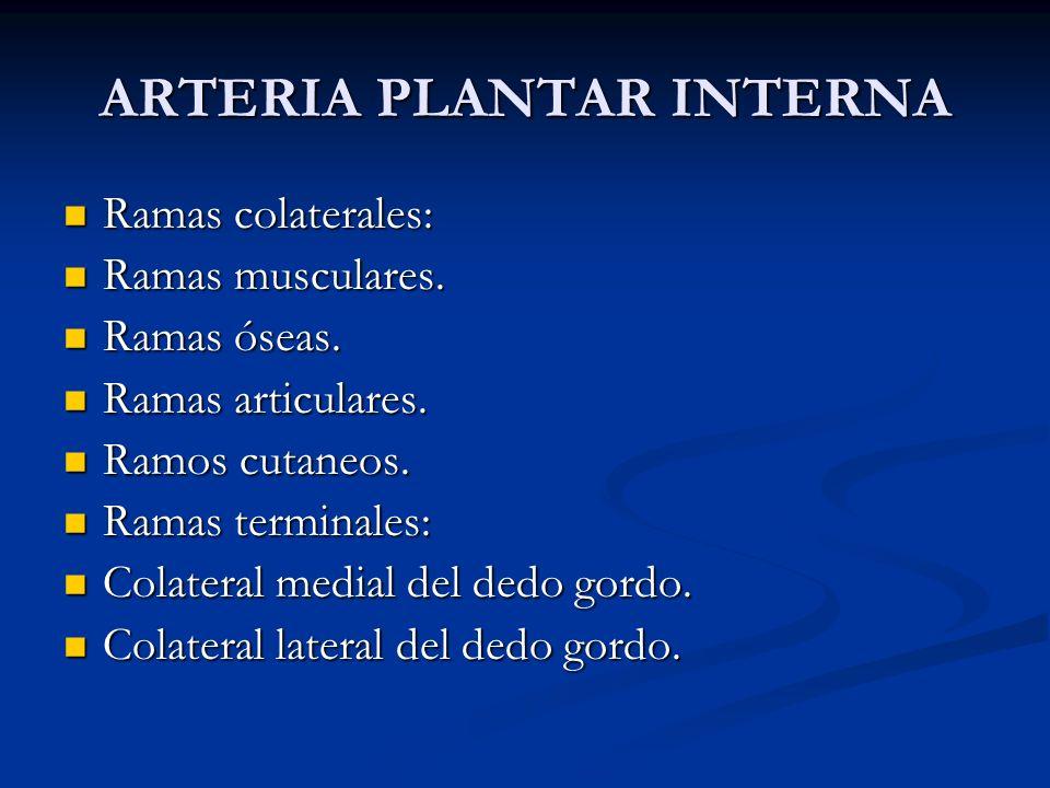 ARTERIA PLANTAR INTERNA Ramas colaterales: Ramas colaterales: Ramas musculares. Ramas musculares. Ramas óseas. Ramas óseas. Ramas articulares. Ramas a