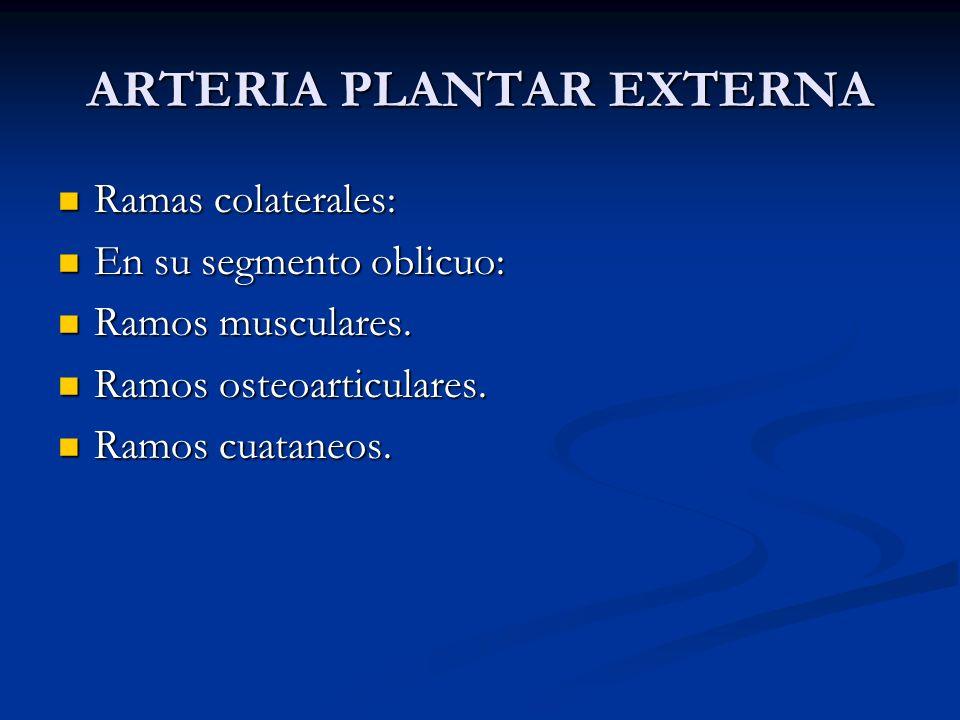 ARTERIA PLANTAR EXTERNA Ramas colaterales: Ramas colaterales: En su segmento oblicuo: En su segmento oblicuo: Ramos musculares. Ramos musculares. Ramo