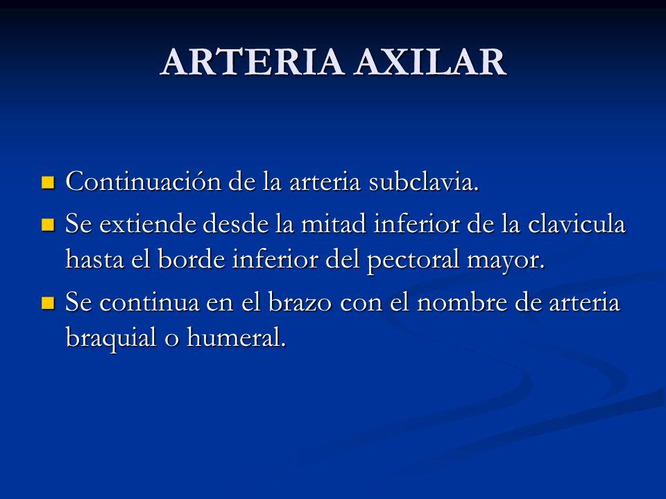 ARTERIA AXILAR Continuación de la arteria subclavia. Continuación de la arteria subclavia. Se extiende desde la mitad inferior de la clavicula hasta e