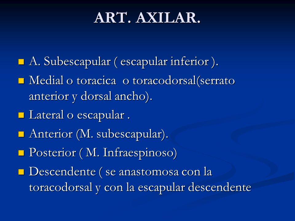 ART. AXILAR. A. Subescapular ( escapular inferior ). A. Subescapular ( escapular inferior ). Medial o toracica o toracodorsal(serrato anterior y dorsa