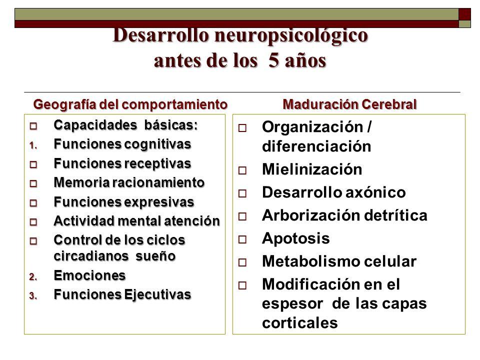 Desarrollo neuropsicológico antes de los 5 años Geografía del comportamiento Capacidades básicas: Capacidades básicas: 1. Funciones cognitivas Funcion