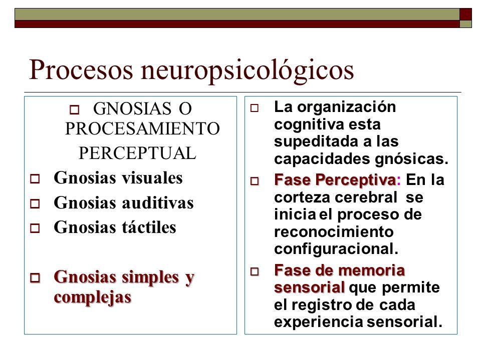 Procesos neuropsicológicos GNOSIAS O PROCESAMIENTO PERCEPTUAL Gnosias visuales Gnosias auditivas Gnosias táctiles Gnosias simples y complejas Gnosias