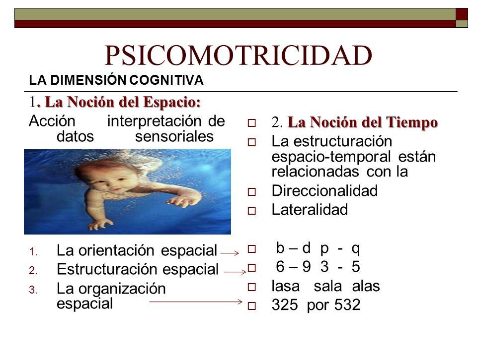 PSICOMOTRICIDAD LA DIMENSIÓN COGNITIVA. La Noción del Espacio: 1. La Noción del Espacio: Acción interpretación de datos sensoriales 1. La orientación