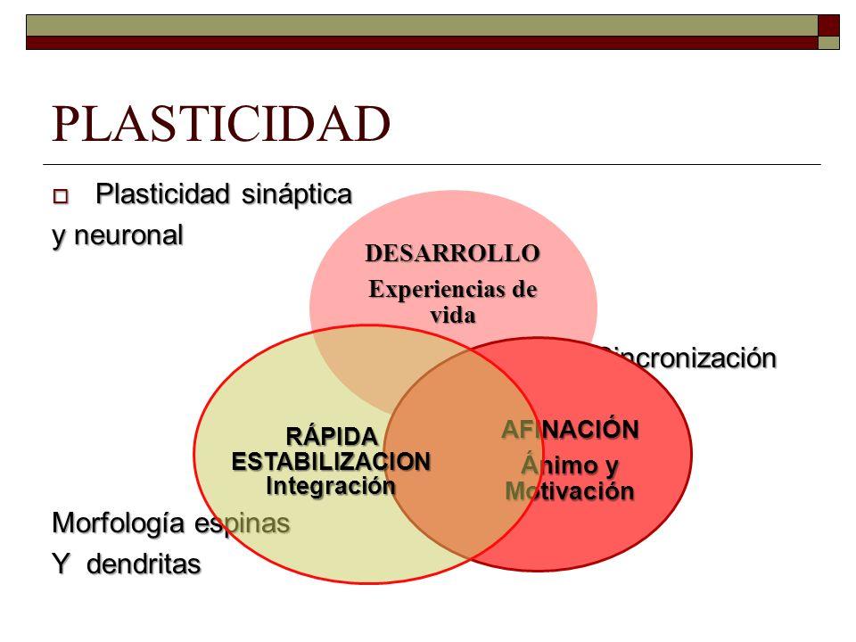PLASTICIDAD Plasticidad sináptica Plasticidad sináptica y neuronal Sincronización Sincronización Morfología espinas Y dendritas DESARROLLO Experiencia