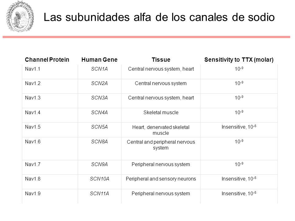 Channel ProteinHuman GeneTissueSensitivity to TTX (molar) Nav1.1SCN1ACentral nervous system, heart10 -9 Nav1.2SCN2ACentral nervous system10 -9 Nav1.3S