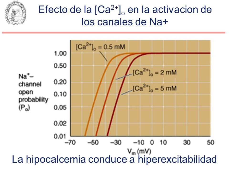 Efecto de la [Ca 2+ ] o en la activacion de los canales de Na+ La hipocalcemia conduce a hiperexcitabilidad