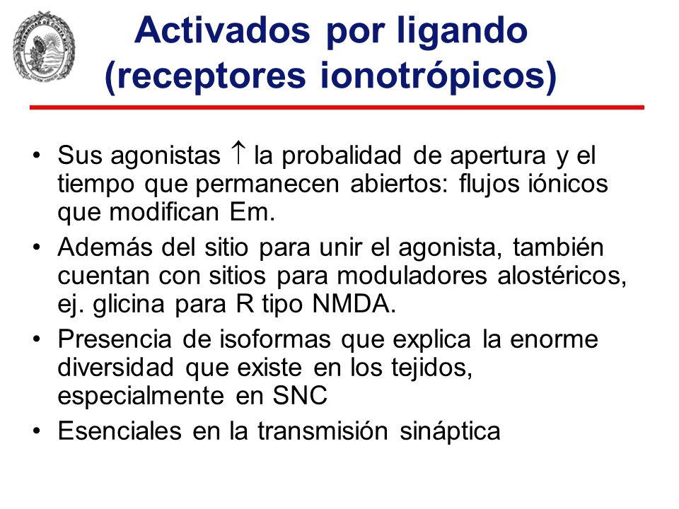 Activados por ligando (receptores ionotrópicos) Sus agonistas la probalidad de apertura y el tiempo que permanecen abiertos: flujos iónicos que modifi