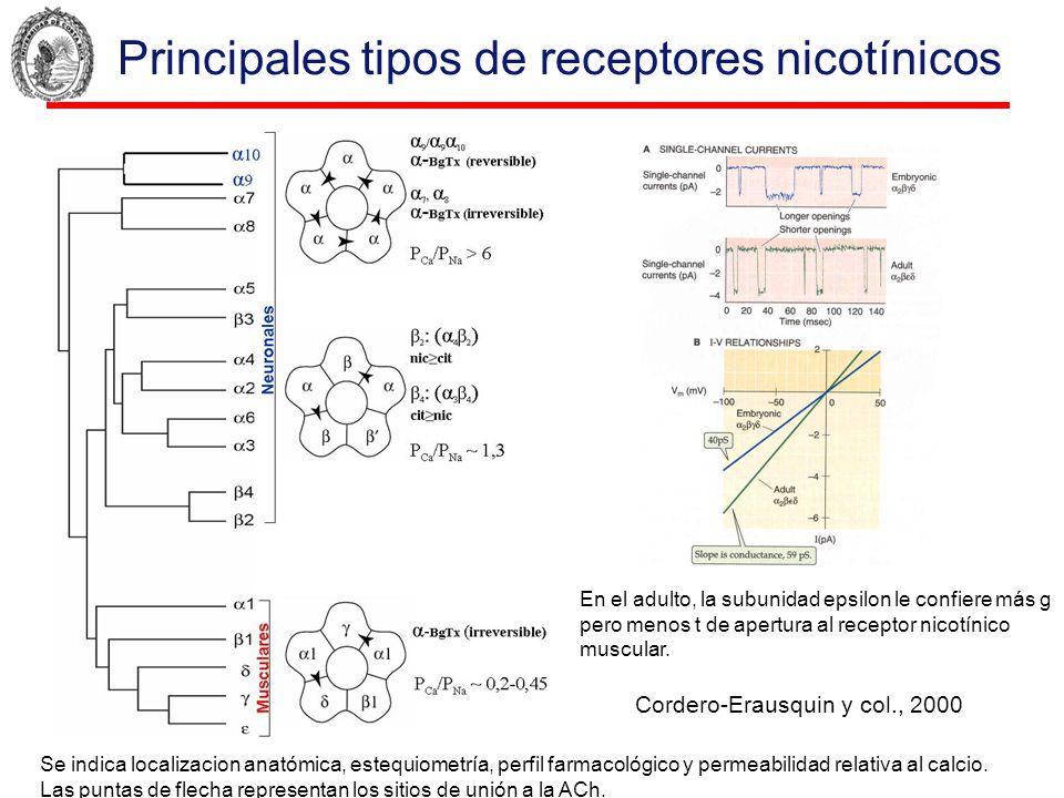 Principales tipos de receptores nicotínicos Se indica localizacion anatómica, estequiometría, perfil farmacológico y permeabilidad relativa al calcio.