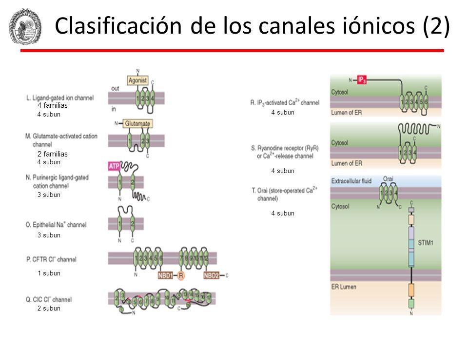 Clasificación de los canales iónicos (2) 4 familias 2 familias 4 subun 3 subun 4 subun 1 subun 2 subun 4 subun