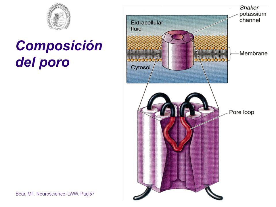 Bear, MF. Neuroscience. LWW. Pag 57 Composición del poro