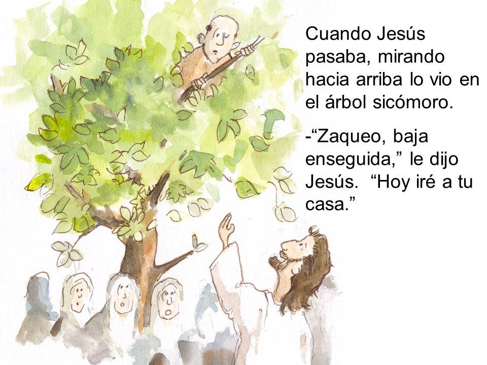Cuando Jesús pasaba, mirando hacia arriba lo vio en el árbol sicómoro. -Zaqueo, baja enseguida, le dijo Jesús. Hoy iré a tu casa.