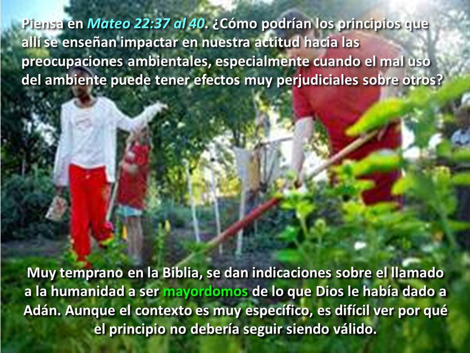 Piensa en Mateo 22:37 al 40. ¿Cómo podrían los principios que allí se enseñan impactar en nuestra actitud hacia las preocupaciones ambientales, especi