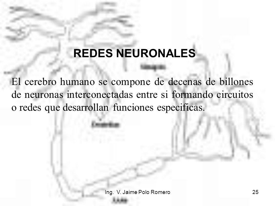 Ing. V. Jaime Polo Romero25 REDES NEURONALES El cerebro humano se compone de decenas de billones de neuronas interconectadas entre si formando circuit