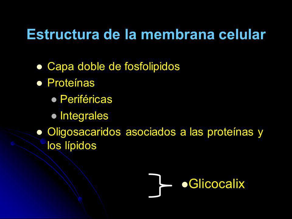 Estructura de la membrana celular Capa doble de fosfolipidos Proteínas Periféricas Integrales Oligosacaridos asociados a las proteínas y los lípidos G