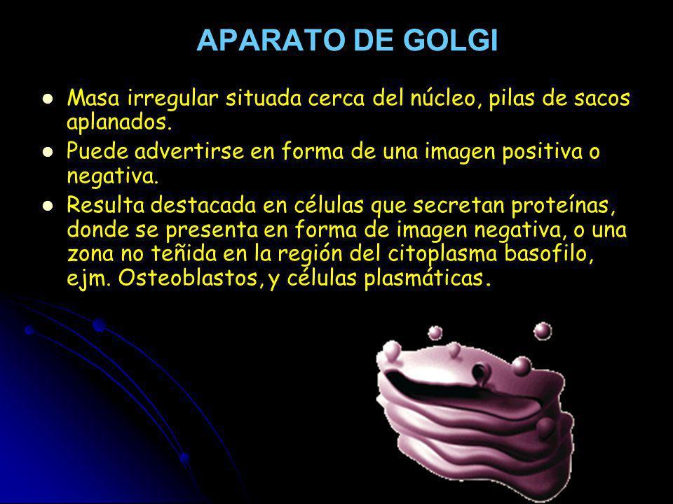 APARATO DE GOLGI Masa irregular situada cerca del núcleo, pilas de sacos aplanados. Puede advertirse en forma de una imagen positiva o negativa. Resul