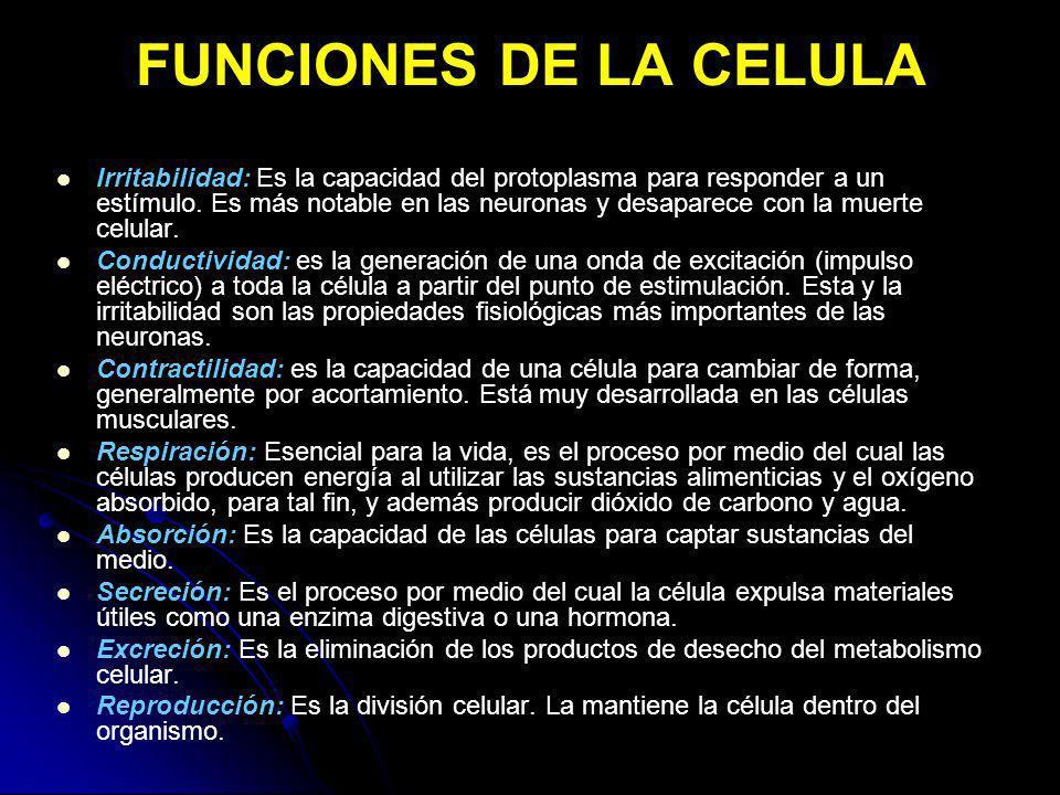 FUNCIONES DE LA CELULA Irritabilidad: Es la capacidad del protoplasma para responder a un estímulo. Es más notable en las neuronas y desaparece con la