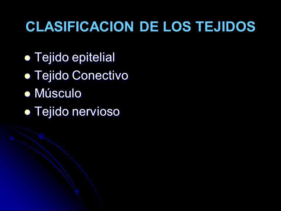 CLASIFICACION DE LOS TEJIDOS Tejido epitelial Tejido epitelial Tejido Conectivo Tejido Conectivo Músculo Músculo Tejido nervioso Tejido nervioso