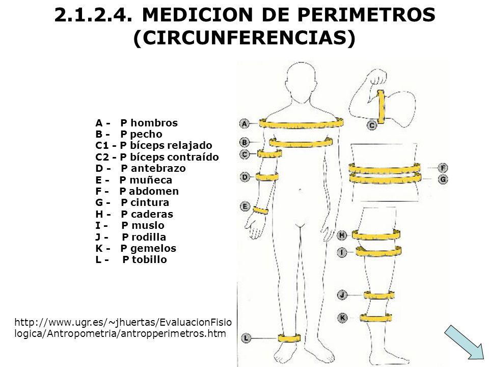2.1.2.4. MEDICION DE PERIMETROS (CIRCUNFERENCIAS) A - P hombros B - P pecho C1 - P bíceps relajado C2 - P bíceps contraído D - P antebrazo E - P muñec