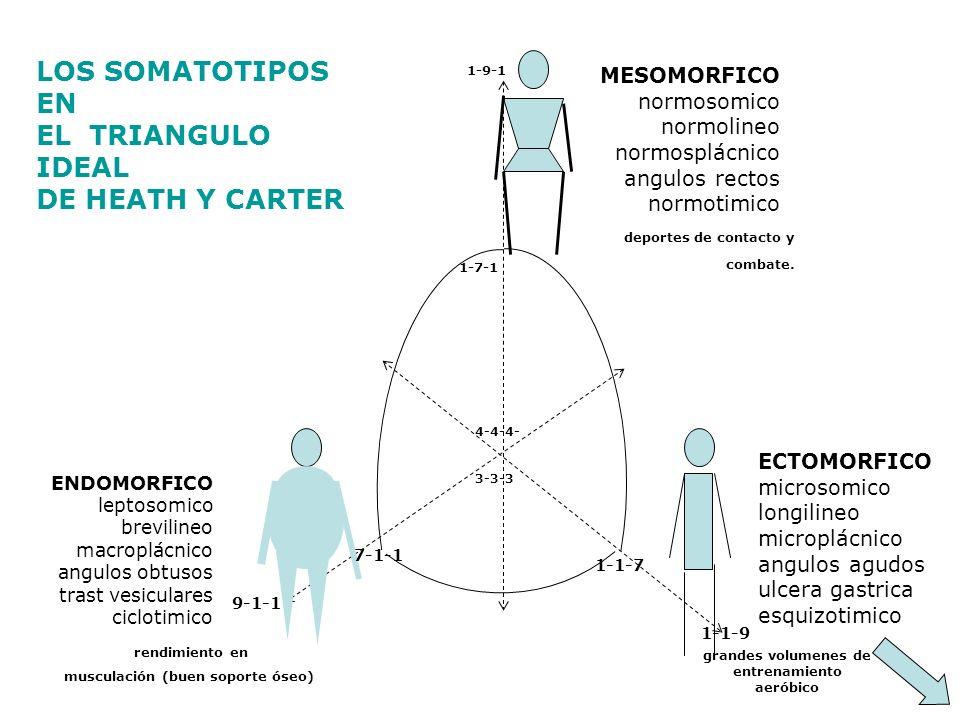 MESOMORFICO normosomico normolineo normosplácnico angulos rectos normotimico LOS SOMATOTIPOS EN EL TRIANGULO IDEAL DE HEATH Y CARTER ECTOMORFICO micro