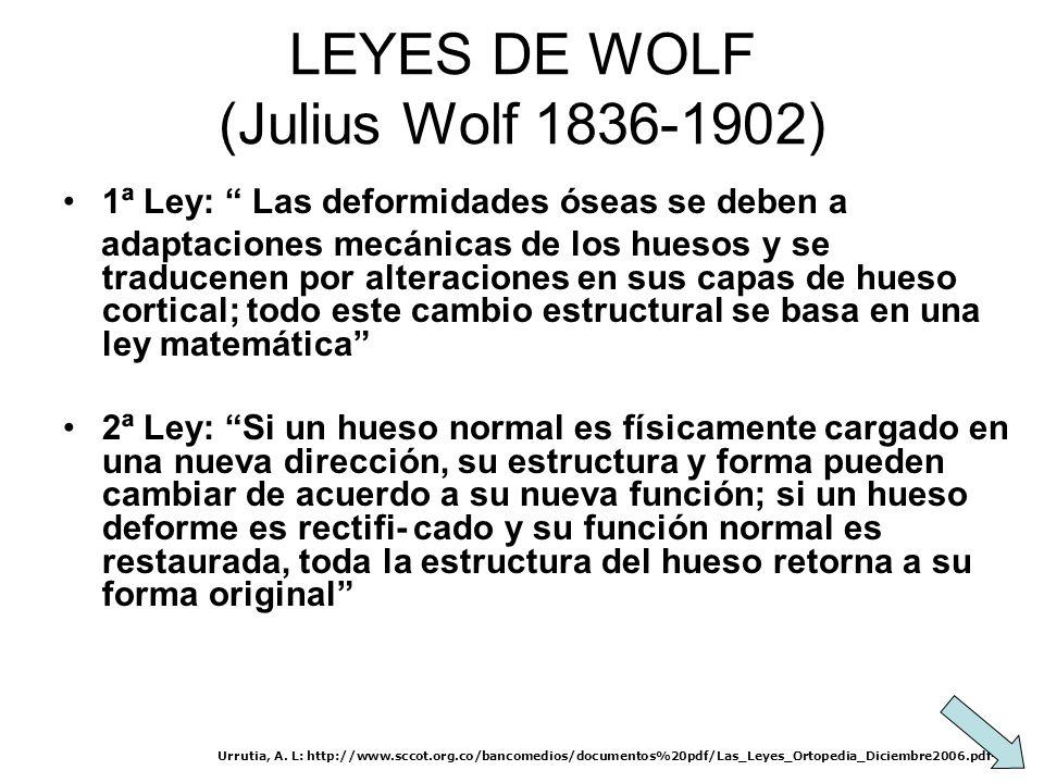 LEYES DE WOLF (Julius Wolf 1836-1902) 1ª Ley: Las deformidades óseas se deben a adaptaciones mecánicas de los huesos y se traducenen por alteraciones