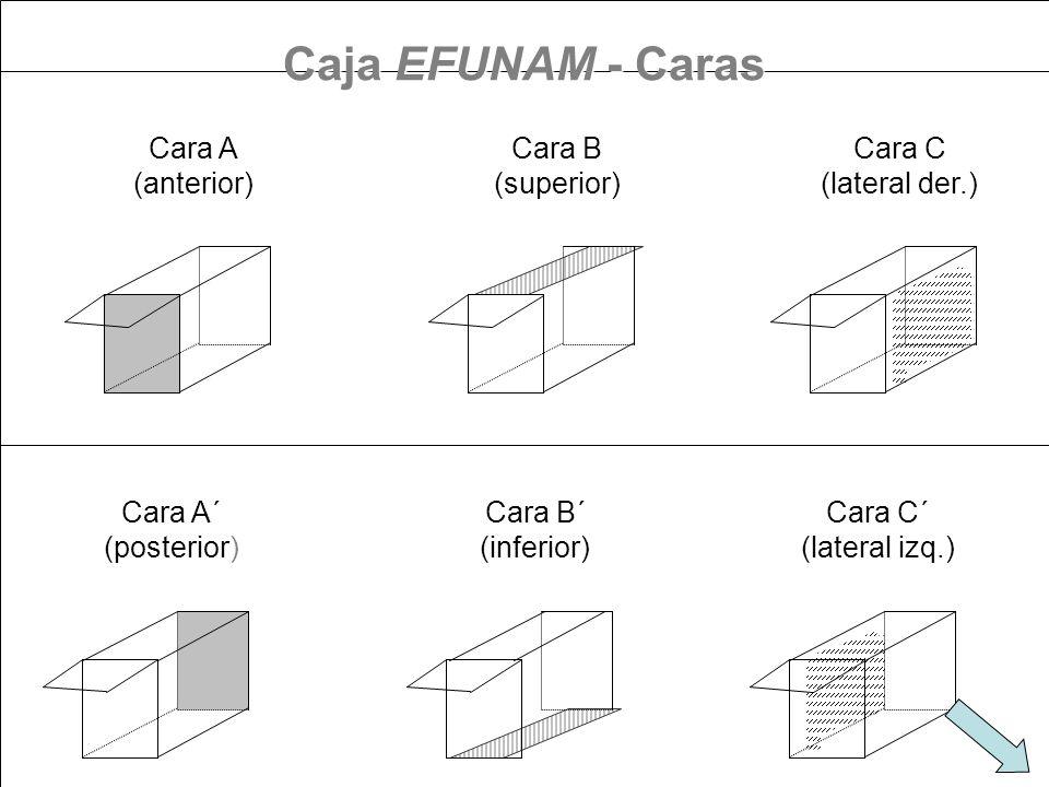 Cara A (anterior) Cara B (superior) Cara C (lateral der.) Cara A´ (posterior) Cara B´ (inferior) Cara C´ (lateral izq.) Caja EFUNAM - Caras