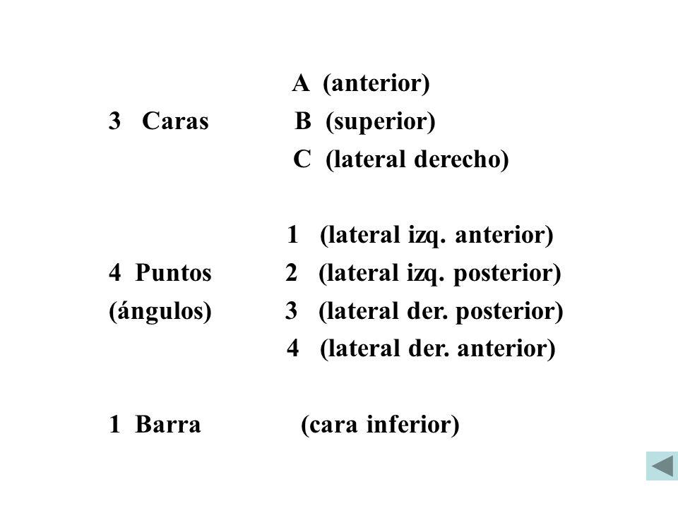 A (anterior) 3 Caras B (superior) C (lateral derecho) 1 (lateral izq. anterior) 4 Puntos 2 (lateral izq. posterior) (ángulos) 3 (lateral der. posterio