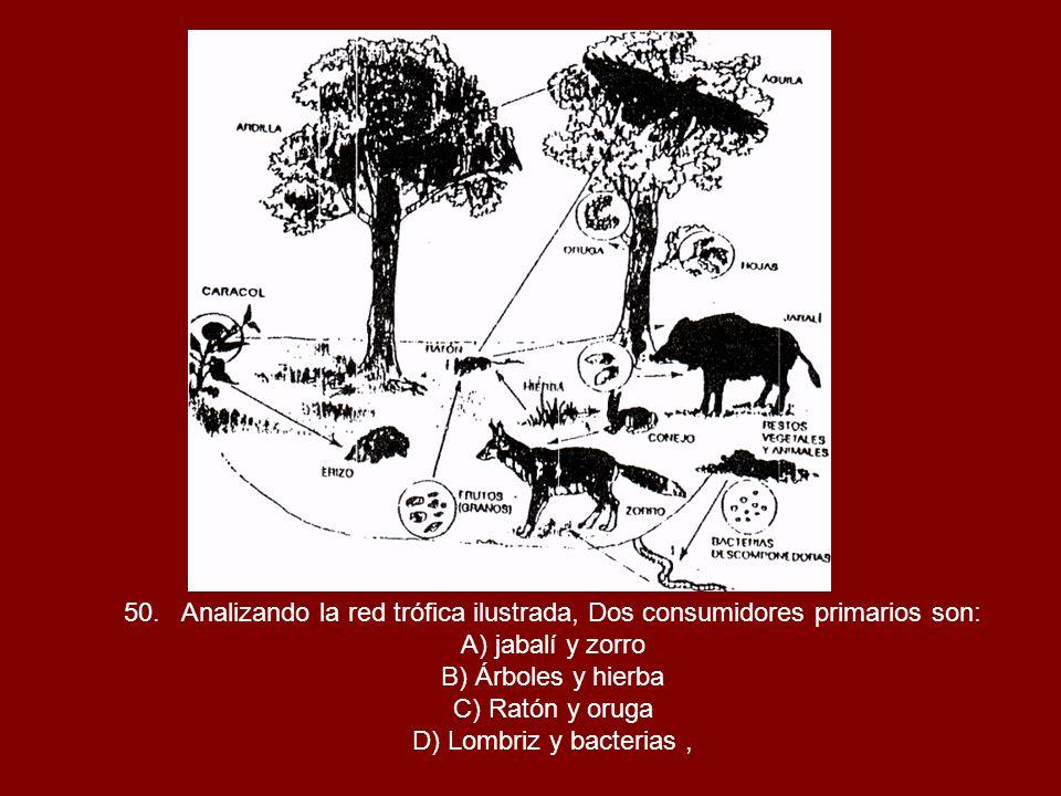50. Analizando la red trófica ilustrada, Dos consumidores primarios son: A) jabalí y zorro B) Árboles y hierba C) Ratón y oruga D) Lombriz y bacterias