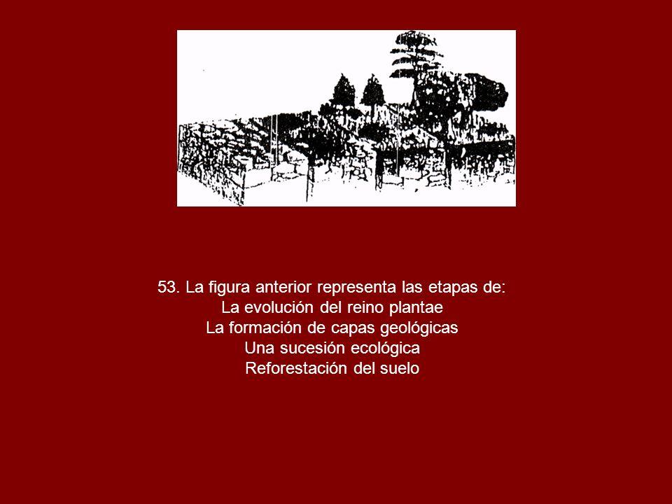 53. La figura anterior representa las etapas de: La evolución del reino plantae La formación de capas geológicas Una sucesión ecológica Reforestación