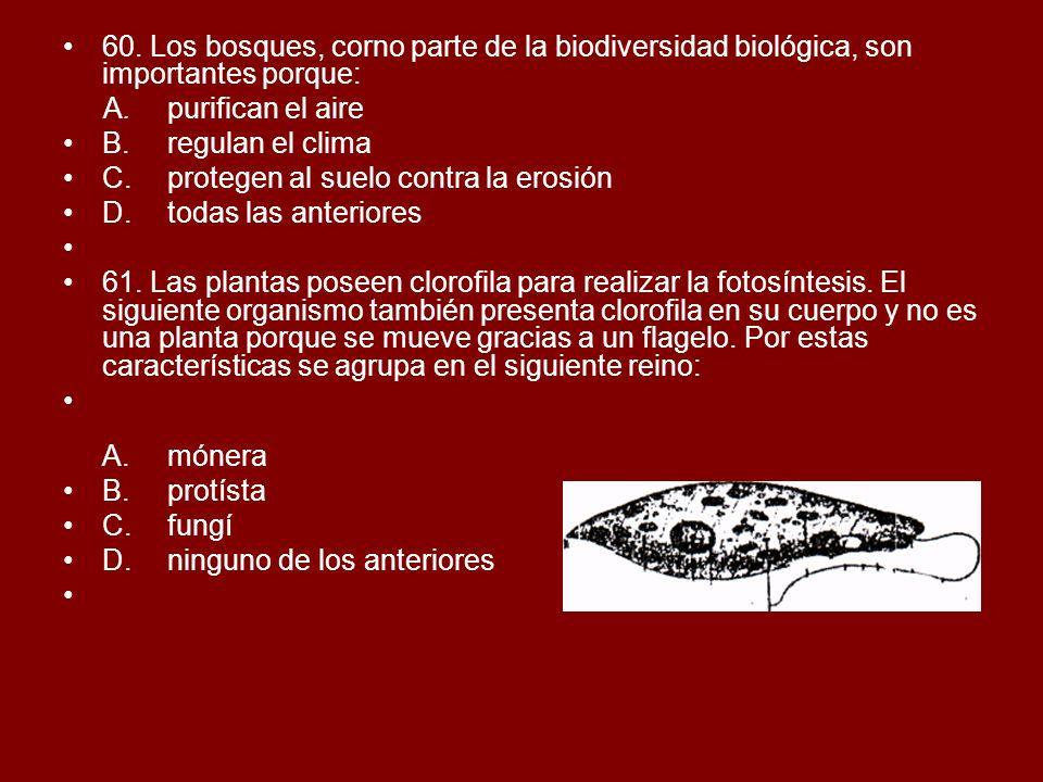 60. Los bosques, corno parte de la biodiversidad biológica, son importantes porque: A.purifican el aire B.regulan el clima C.protegen al suelo contra