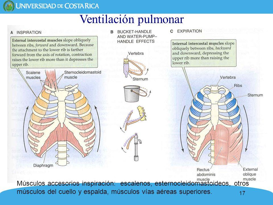 17 Ventilación pulmonar Músculos accesorios inspiración: escalenos, esternocleidomastoideos, otros músculos del cuello y espalda, músculos vías aéreas