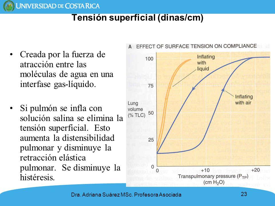 23 Tensión superficial (dinas/cm) Creada por la fuerza de atracción entre las moléculas de agua en una interfase gas-líquido. Si pulmón se infla con s