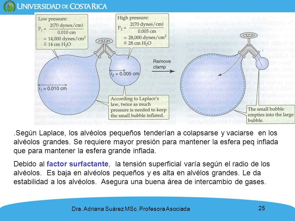 25 Dra. Adriana Suárez MSc. Profesora Asociada.Según Laplace, los alvéolos pequeños tenderían a colapsarse y vaciarse en los alvéolos grandes. Se requ