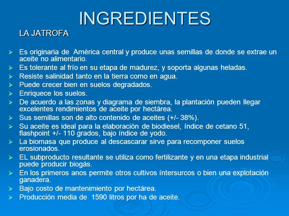 INGREDIENTES LA JATROFA Es originaria de América central y produce unas semillas de donde se extrae un aceite no alimentario. Es tolerante al frío en