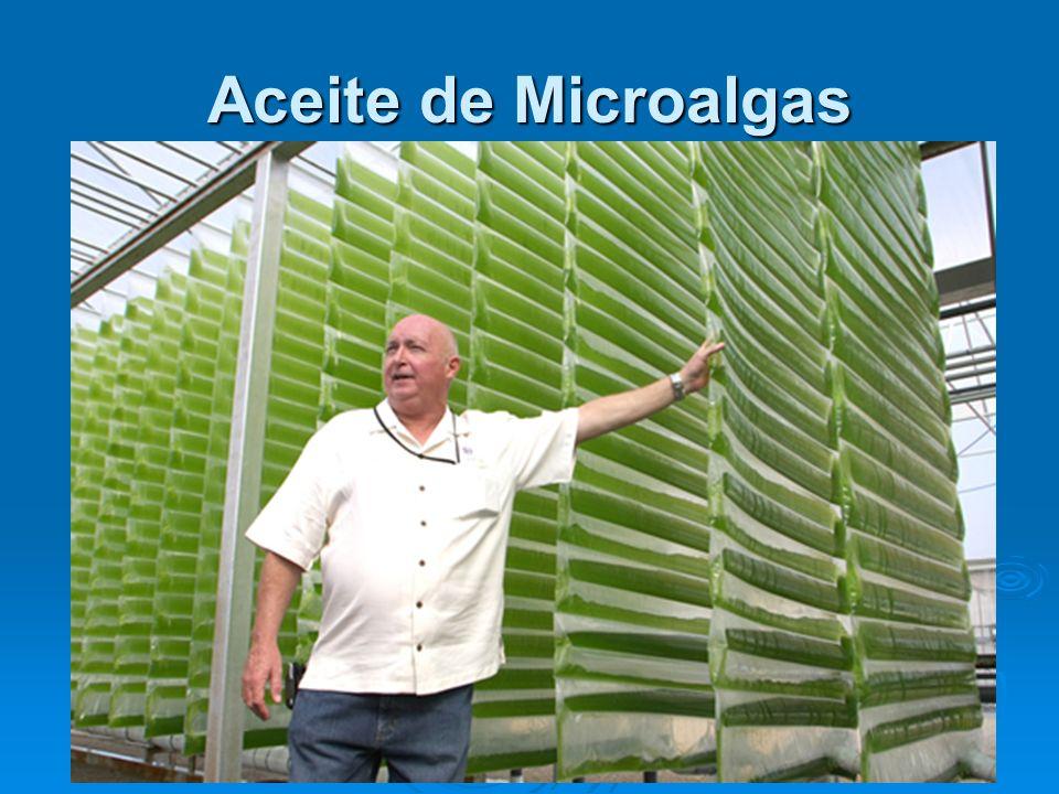 Aceite de Microalgas